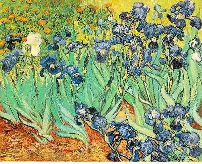 Vincent Van Gogh And Drawing Plants